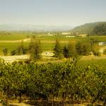 """Sonoma Wine Country"" by chesman"