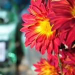 """""""Orange Flowery"""" by funkydive"""