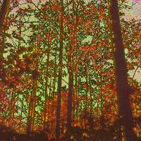 Trees Art Prints & Posters by George P. Bouchoc