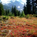 """Mt. Jefferson with red ground cover"" by ATDesigns"