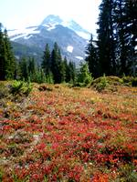 Mt. Jefferson with red ground cover