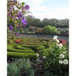 """aMazing Garden, aMazing Grace"" by LauriJon"