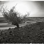 """Green bush staying alone in a desert lands."" by AlexeyVronsky"