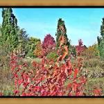 """""""Oil Painting Effect of fall landscape"""" by rjg-productions"""