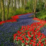 """Flower Path - red flower path & blue flower path"" by vision"