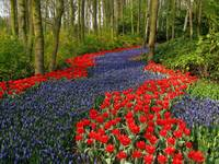 Flower Path - red flower path & blue flower path
