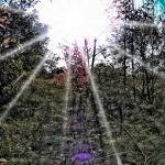 """Enhanced Luminescence & Lens Flare Photo"" by rjg-productions"