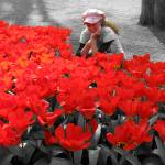 """""""My Little Red Flower"""" by vision"""