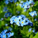 """Mini Blue Flowers"" by ATDesigns"