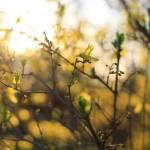 """Spring #2"" by tiffanybrubaker"