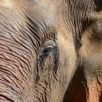 """""""Elephant"""" by KNKphotos"""
