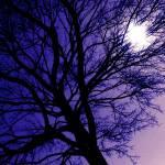 """A Strange Twilight"" by lbarrett"