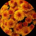 """""""Orange glaze"""" by TheMears"""