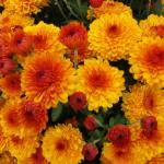"""""""Autumn Flowers"""" by TheMears"""