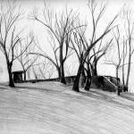 """TREES IN SCHENLEY PARK"" by jackrodney"
