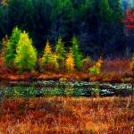 """New Hampshire Marsh Edge"" by bavosiphotoart"