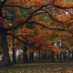 """october oaks"" by jackimroczkowski"
