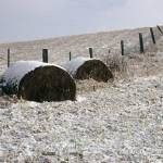 """Hay Bales In Winter"" by DMHImages"