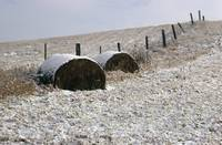 Hay Bales In Winter