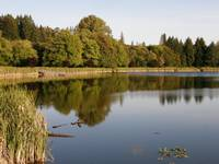 Mill Pond at Vernonia