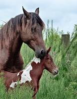 Her New Foal