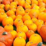 """""""Too Much Orange"""" by LockeStudio"""