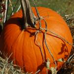 """Pumpkin"" by NicholeBurke"
