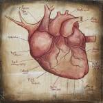 """Heart Map"" by Curiology"