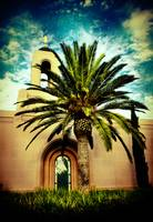 Newport Temple Palm Color