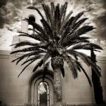 """Newport Temple Palm Black and White"" by LDSTempleArt"