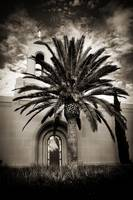 Newport Temple Palm Black and White