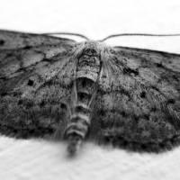 Moth Art Prints & Posters by Nick Fuller