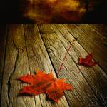 """autumn storm by veikko suikkanen"" by TALENTNETWORK"