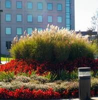 grass arrangement in front of building