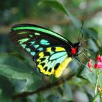 """Beautiful Butterfly"" by MRLance"