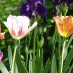 """""""Spring garden"""" by MRLance"""