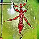 """Bug"" by rickyrake"