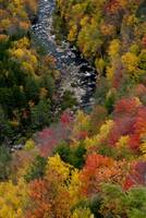 Blackwater River fall colors