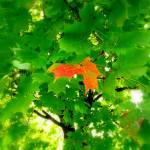 """the loner 2"" by LoraxLady"