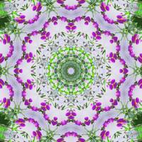 Purple Wildflower Kaleidoscope Art 5