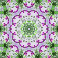 Purple Wildflower Kaleidoscope Art 6