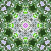 Purple Wildflower Kaleidoscope Art 8
