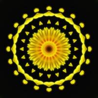 Large Yellow Wildflower Kaleidoscope Art 2