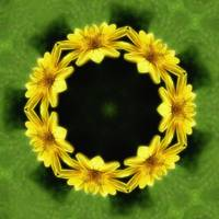 Large Yellow Wildflower Kaleidoscope Art 3