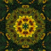 Large Yellow Wildflower Kaleidoscope Art 6