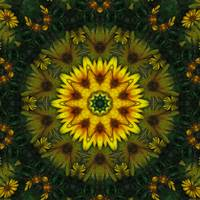 Large Yellow Wildflower Kaleidoscope Art 7