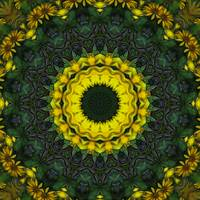 Large Yellow Wildflower Kaleidoscope Art 8