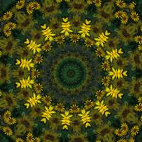 Large Yellow Wildflower Kaleidoscope Art 9