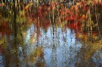 Autumn Reflection On Water