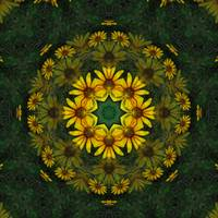 Large Yellow Wildflower Kaleidoscope Art 11